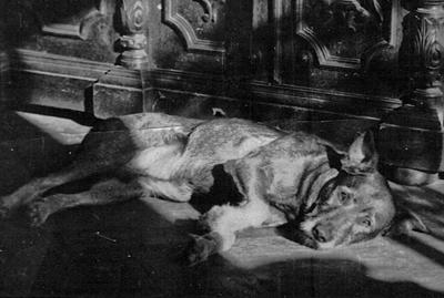 Rex, Guido Felix Brinkmanns dog, circa 1935